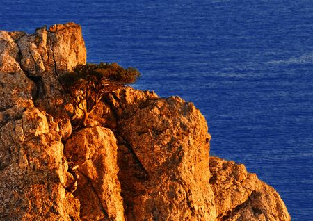 Beautiful scenery ? close-up of rock and juniper growing on it, in the rays of the sun at sunset, Black sea, Crimea