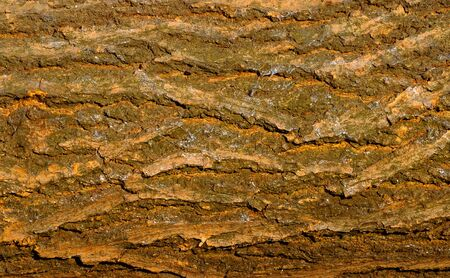 Natural texture - the apricot tree bark closeup with traces of slugs