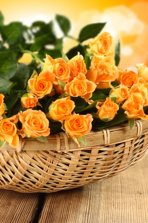 bunch of yellow roses in linen basket Stock Photo
