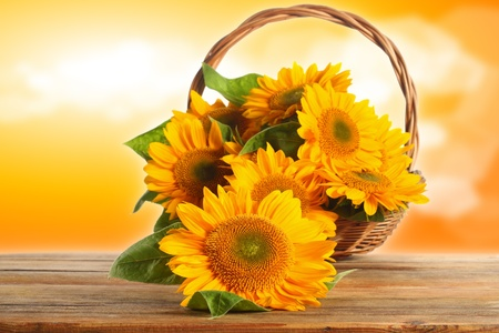 sunny sunflowers photo