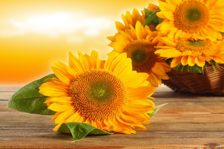 basket of sunflowrs on the wooden table