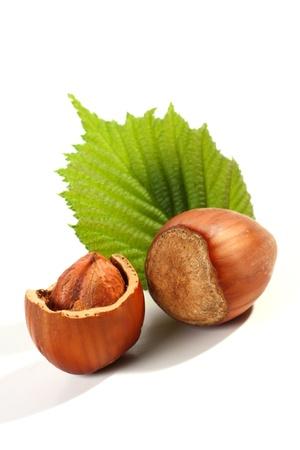 two hazelnuts on white background