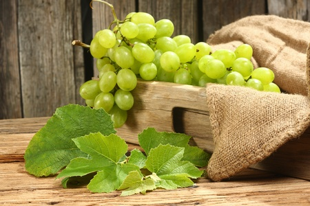 bunch of green grapes with vine leafs photo