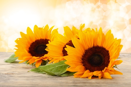 sunflowers on the table Stock Photo