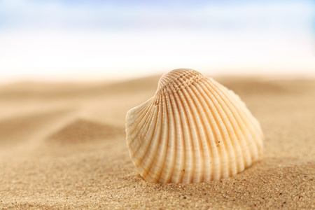 shell on the sand Stock Photo - 13375887
