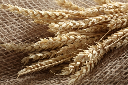 wheat blades on linen cloth photo