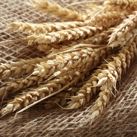 blade of wheat