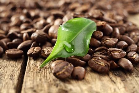 granos de caf� verde de la hoja ingenio Foto de archivo - 13999862