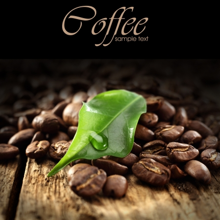 coffee beans with green leaf on black background photo