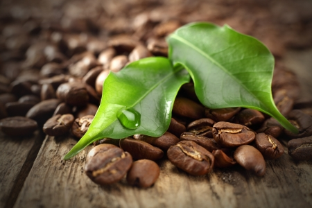 green leaves on coffee beans photo