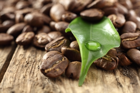 green leaf with coffee beans