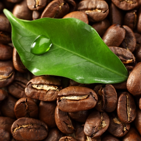 green leaf with roasted coffee beans photo