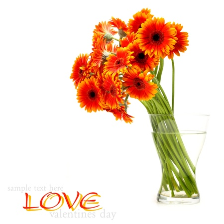 bouquet of orange gerbera Stock Photo - 15759967