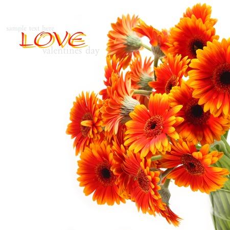 orange flowers bloom on white Stock Photo - 15759969