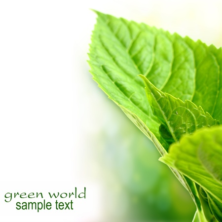 ecological green leaf Stock Photo - 15733459