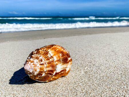Tropikalna plaża z muszli na pierwszym planie na piasku i rozmyte morze, wakacje, tło. Podróże i wakacje na plaży, wolne miejsce na tekst. Zdjęcie Seryjne