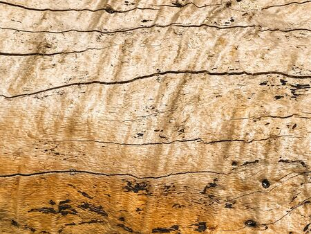 Natural wood, wood cut, aged wood, cracks from time and weather. Brown background, wood texture. Place for printing.