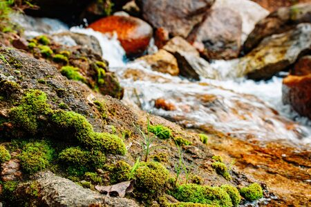 A small mountain river flows among large stones in mountainous areas through the forest. Natural landscape, with a clean river a beautiful landscape, clean air. Ecologically clean area.