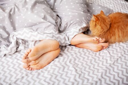 Legs of lovers under blanket and red cat sit on bed.