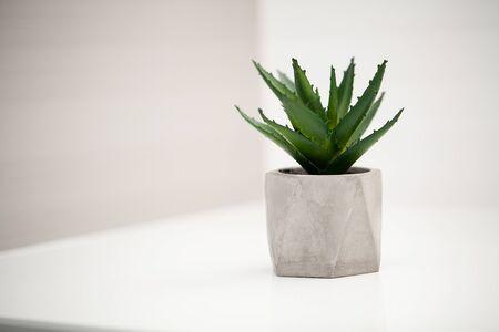 Spa. Succulent plant on window ledge in modern bathroom.