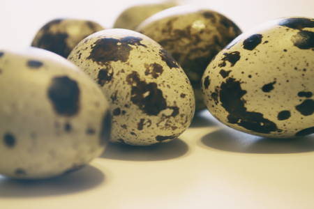 Quail eggs. Group of quail eggs isolated on white background. Closeup photo 写真素材