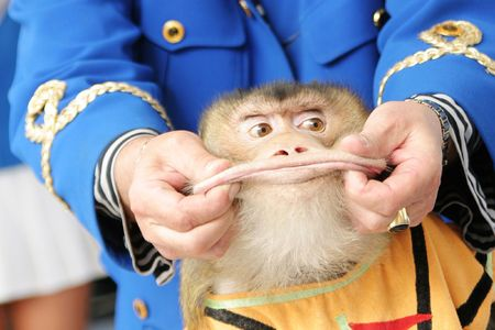 Show with the monkey with greater lips