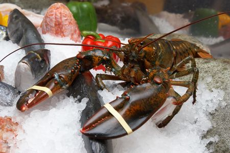 Lobster, a various fish on an ice, pepper