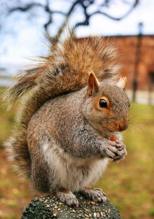 squirrel eats nutlets
