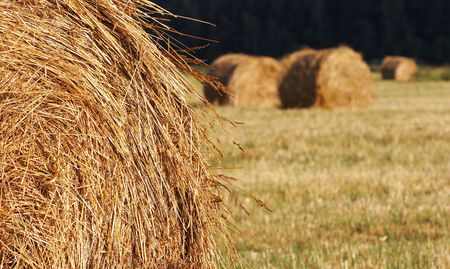 Glade with haystacks. Russia Stock Photo - 3649017