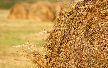 Glade with haystacks. Russia  Stock Photo - 3751685