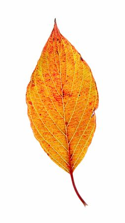 Leaf on a gleam, capillaries of a leaf are visible. photo