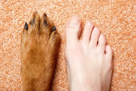 Human foot and paw of a Rottweiler on a pink carpet.