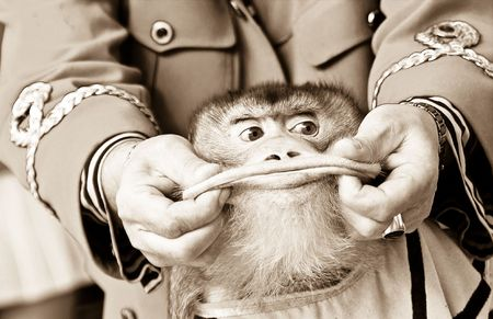 Show with the monkey with greater lips Stock Photo - 4812133