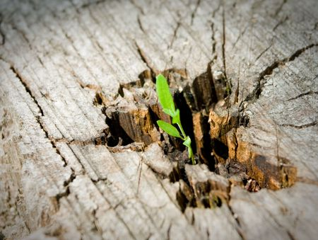 tree stump: Young sprout on an old tree