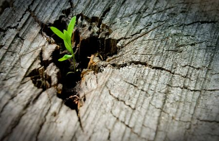 Young sprout on an old tree