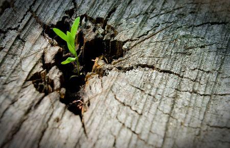 dode bladeren: Young ontspruiten op een oude boom Stockfoto