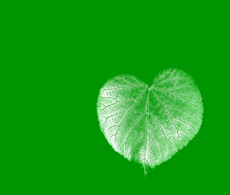 Leaf on a gleam, capillaries of a leaf are visible photo