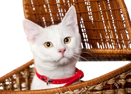 small cute kitten isolated on white Stock Photo