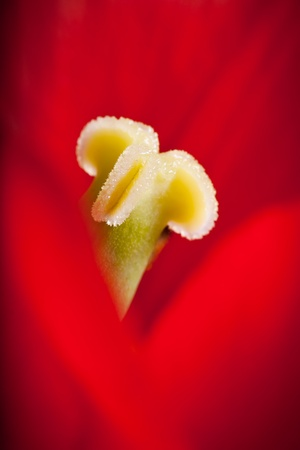 Inside the Tulip photo