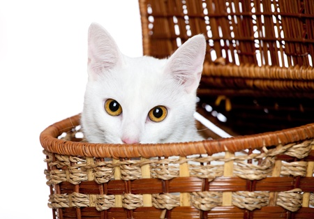 small cute kitten isolated on white photo