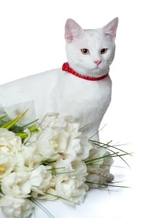 romantic kitten Stock Photo - 13063338