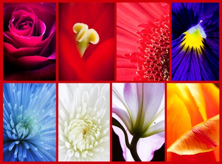 flowers collage Stock Photo - 13063346