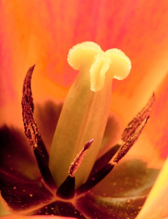 colour intensity: Inside the Tulip