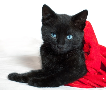 little black kitten  age of 1 5 months