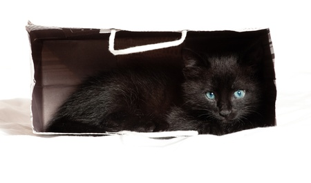 age 5: little black kitten  age of 1 5 months