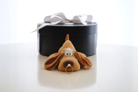 Funny puppy staring at bride ring in front of a gift box photo