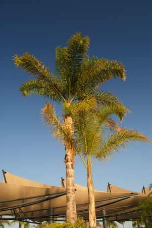 nautic: Palmtrees at the entrance of new Santa Pola nautic port