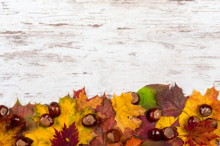 A bunch of autumn leaves