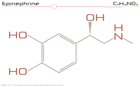 Large and detailed illustration of the molecule of epinephrine 向量圖像