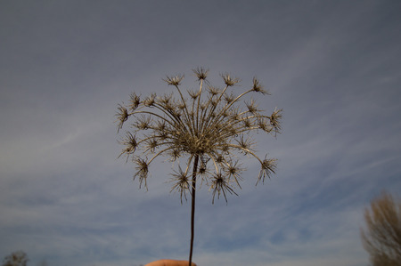 dandelion blown away against a cloudy sky, there is free space to fill Banque d'images